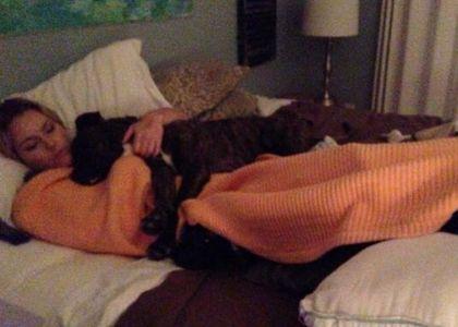 Sci, Lindsey Vonn morsa dal suo cane: operata