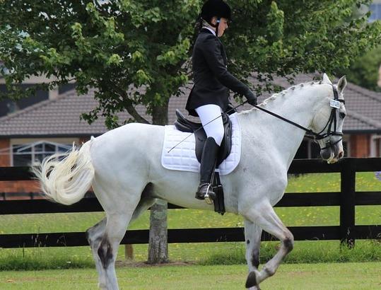 APPELLO - «Facciamo ripartire l'equitazione»
